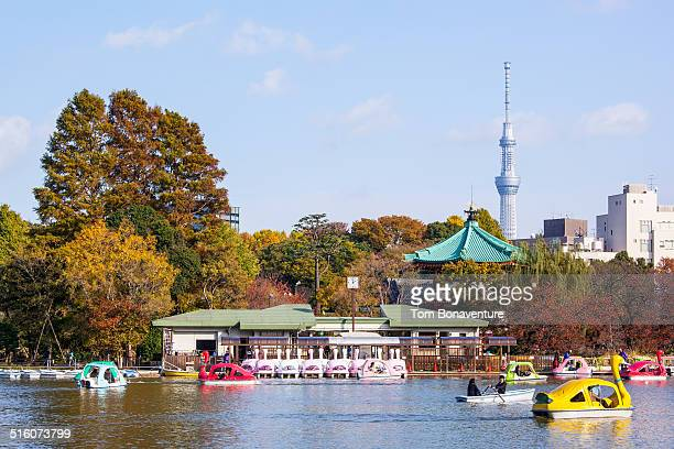 autumn in ueno park with tokyo skytree - ueno park stock photos and pictures
