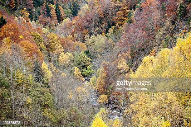 Autumn in Valley of Aran