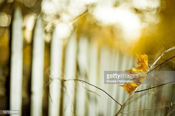 Autumn in Yellow