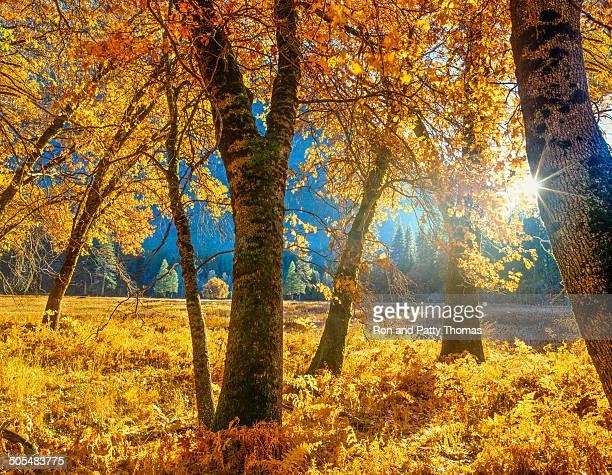 Autumn in Yosemite NP,CA (P)