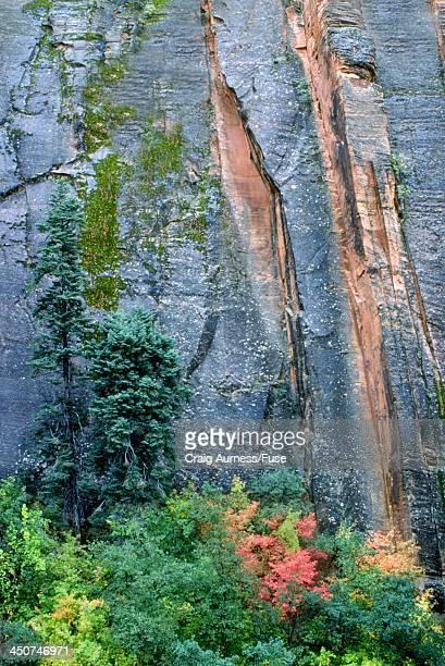 autumn in zion national park - public domain imagens e fotografias de stock