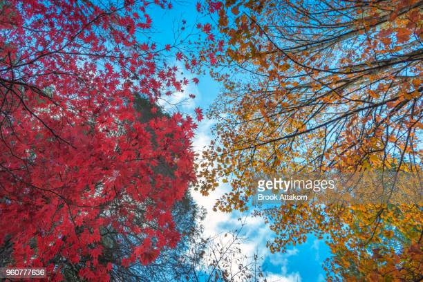 Autumn is a Colour Season.