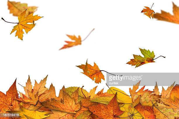 autumn is here - autumn falls stock pictures, royalty-free photos & images
