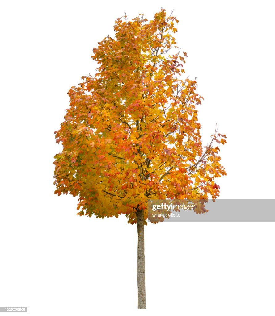 Autumn isolated on white background. Yellow red green leaves. Nature object : Stock Photo