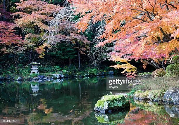 Otoño jardín japonés