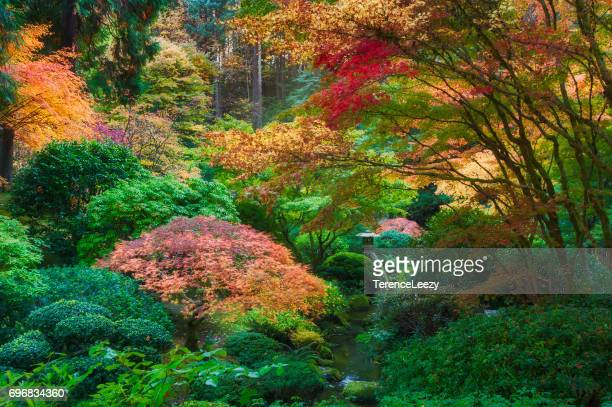 autumn japanese garden - japanese garden stock photos and pictures