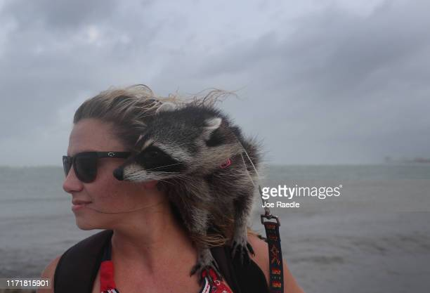 Autumn Kivora and her pet raccoon Ellie Mae check out the weather conditions as Hurricane Dorian continues to make its way past the Florida coast on...