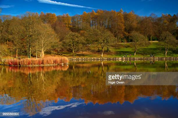 autumn lakeside - nigel owen stock pictures, royalty-free photos & images