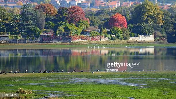 autumn landscape in la coruna - grove imagens e fotografias de stock
