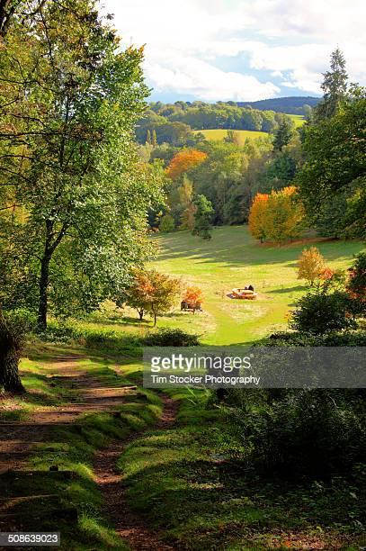 Autumn landscape in portrait