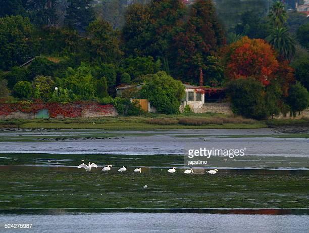 autumn landscape in the estuary of o burgo - grove imagens e fotografias de stock