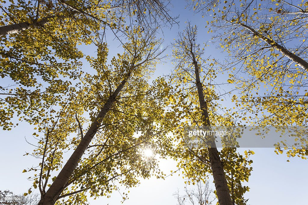 Autumn landscape : Stock Photo