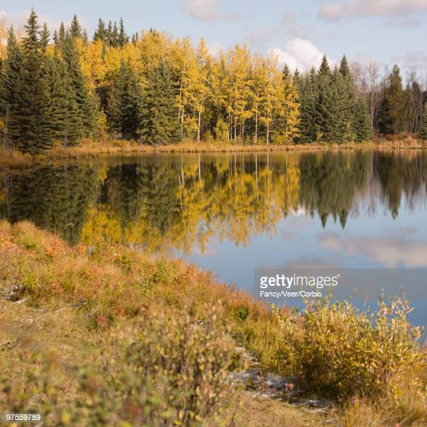autumn landscape - climat stock pictures, royalty-free photos & images