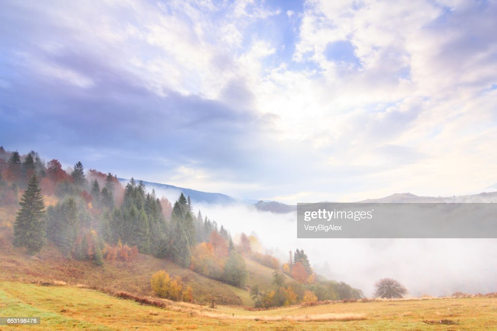 Autumn landscape with fog in the mountains. Fir forest on the hills. Carpathians, Ukraine, Europe : Foto stock