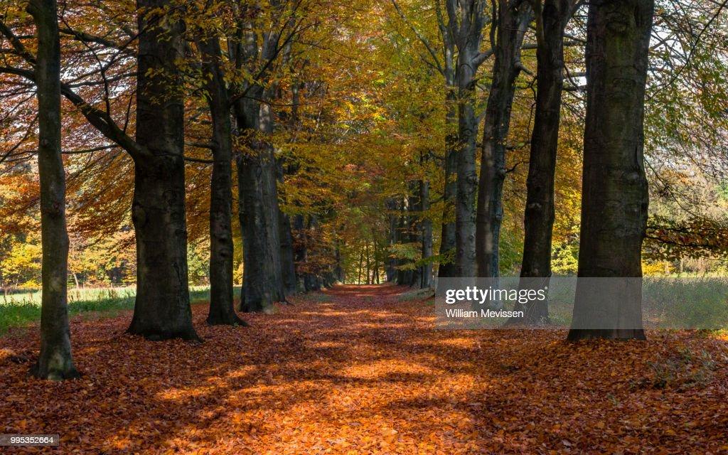 Autumn Lane : Stockfoto
