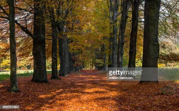 autumn lane - william mevissen stock pictures, royalty-free photos & images