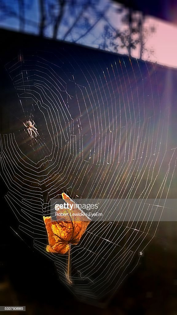 Autumn Leaf And Spider : Foto stock