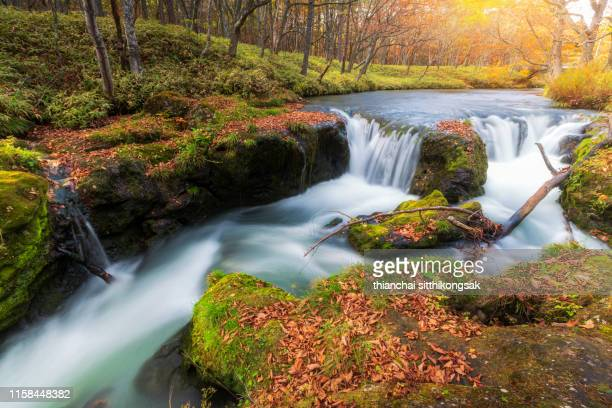 autumn leaf and waterfall in nikko national park, japan - nikko city stock pictures, royalty-free photos & images