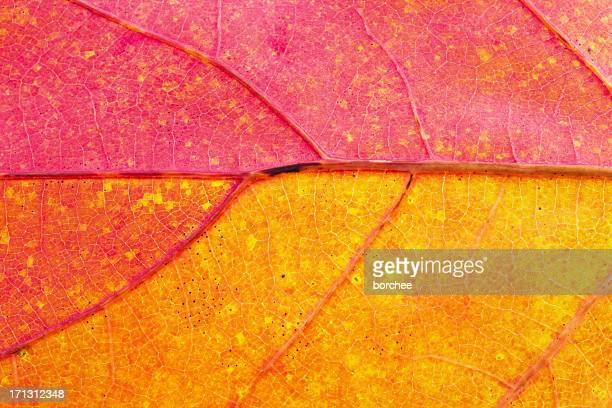 Herbst Blatt Nahaufnahme