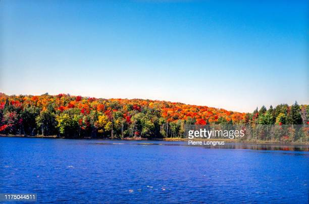 autumn leaf color, laurentian forest surrounding a lake - canada stock pictures, royalty-free photos & images
