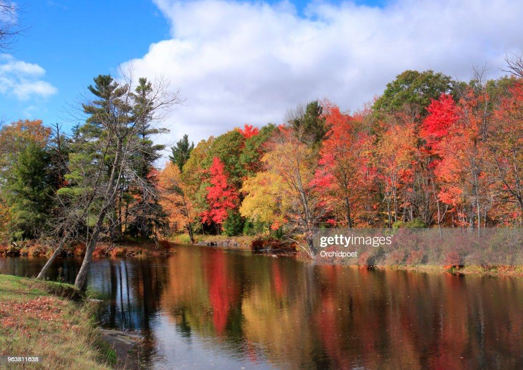 Autumn Leaf Colors by Skootamatta Rive : Stock Photo
