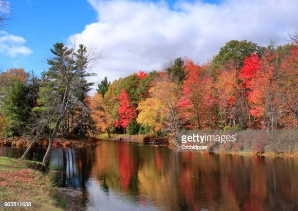 folha de outono cores por skootamatta rive - árvore de folha caduca - fotografias e filmes do acervo