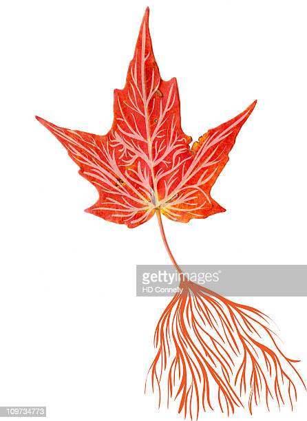 Leafs In Hd Stock Pictures Royalty Free Photos Images Getty Images