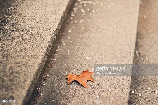 autumn leaf fallen on steps - alexandra pavlova stock pictures, royalty-free photos & images
