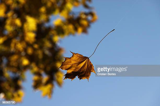 autumn leaf falling - bortes stock photos and pictures