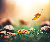 Autumn Leaf Falling To The Ground