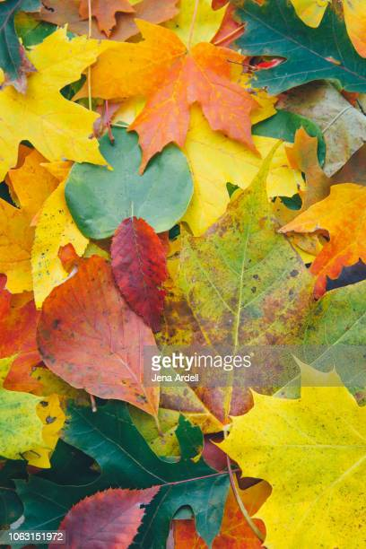 autumn leaf, leaf pile, pile of leaves, fall leaves on ground, fall background, fall season, fall leaves background, autumn leaves, autumn background - september stock pictures, royalty-free photos & images