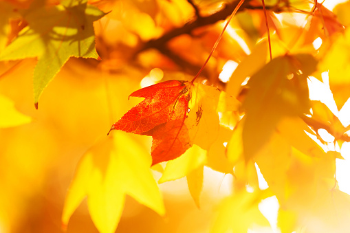 Autumn leaf, light and colors - gettyimageskorea