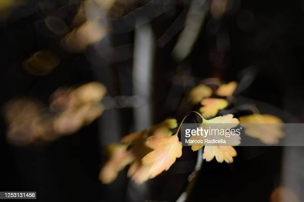 autumn leaf - radicella stock pictures, royalty-free photos & images