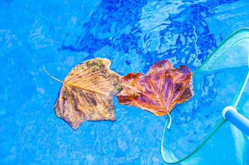 Autumn leafs clean swimming pool 1031473092