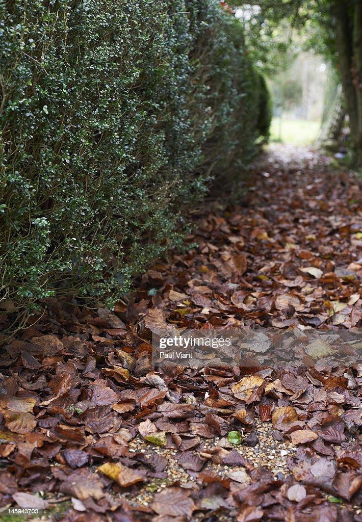 autumn leafs : Photo