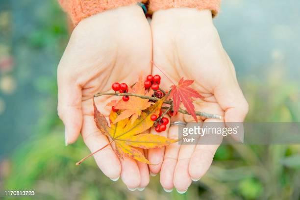 autumn leanes on hands - november stock-fotos und bilder