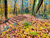 Autumn leaves after rain with steps