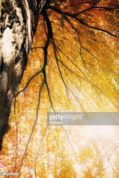 Herbstliches Laub gegen Sonnenlicht