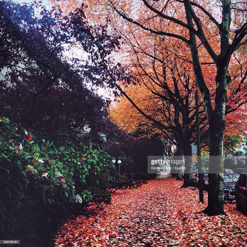 Autumn Leaves Along Alley : Foto stock