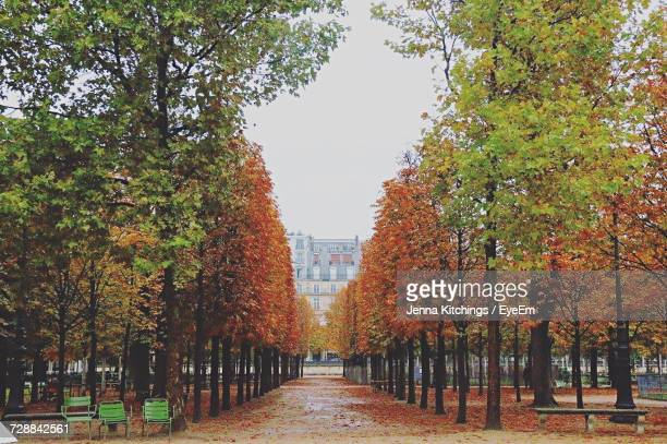 autumn leaves amidst trees in park - barrie stock pictures, royalty-free photos & images