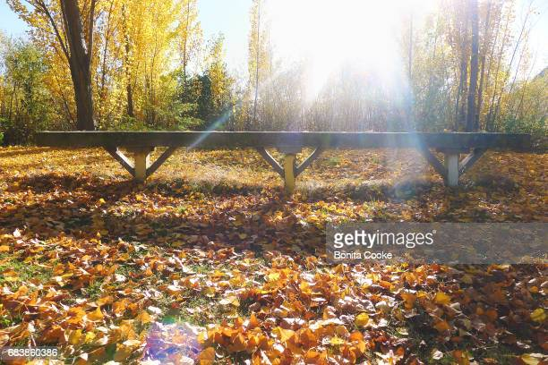 Autumn leaves and a bench seat