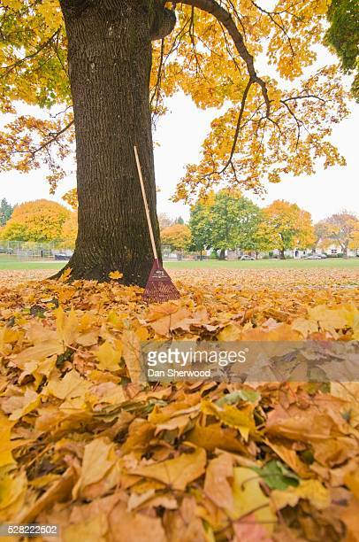 autumn leaves and a rake leaning against a tree - dan sherwood photography stock pictures, royalty-free photos & images