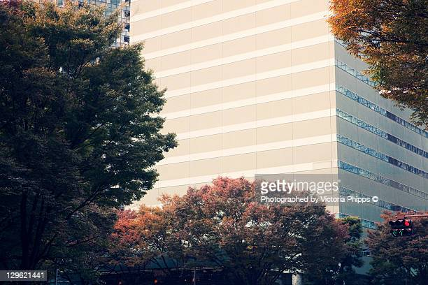 Autumn leaves and building