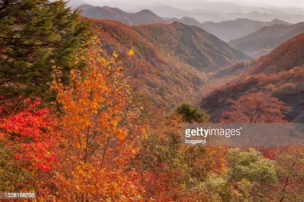 autumn leaves and hazy mountains - isogawyi - fotografias e filmes do acervo