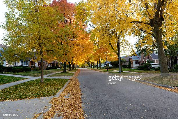 Autumn leaves and residential street