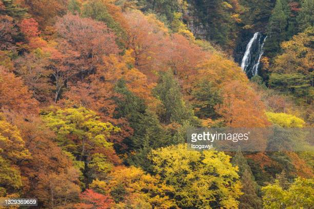 autumn leaves and waterfalls at souryukyo - isogawyi stock pictures, royalty-free photos & images