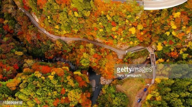 autumn leaves and way - koyasan stock-fotos und bilder