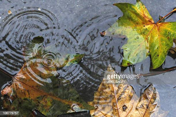 Autumn leaves are partially covered by drops of rain on November 9 2010 in Paris AFP PHOTO JOEL SAGET