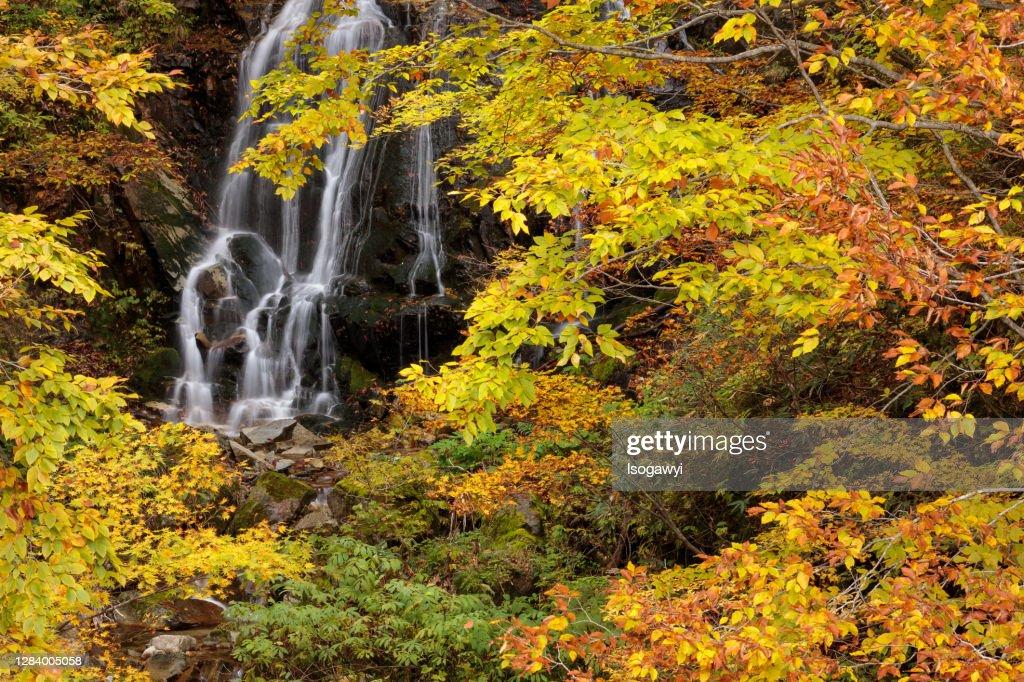 Autumn Leaves Around The Waterfalls : ストックフォト
