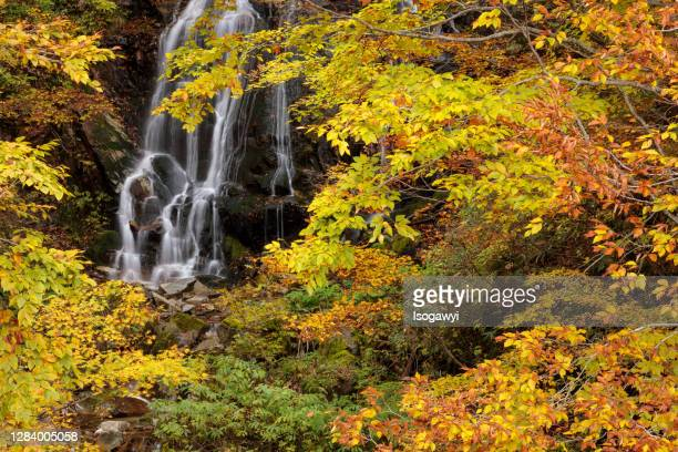 autumn leaves around the waterfalls - isogawyi stock pictures, royalty-free photos & images